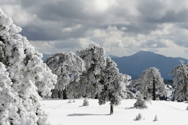 The snowy mountains of Troodos